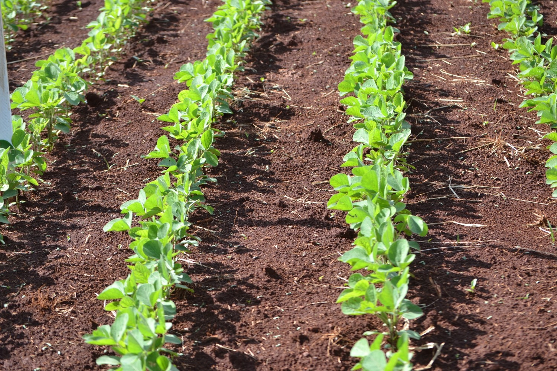 Agricultura Lidera Preservação Do Meio Ambiente No Brasil