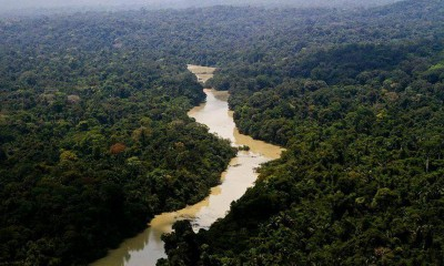 Reserva Florestal Jamanxim, na Amazônia